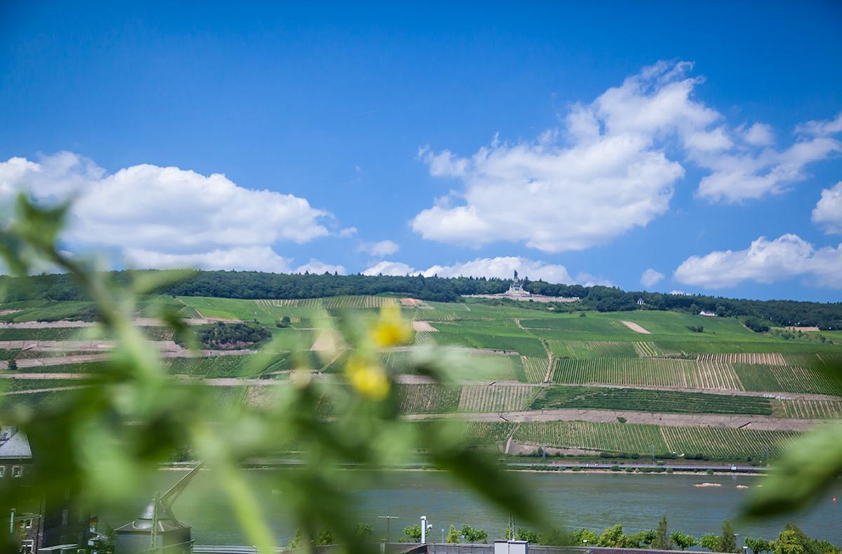 Blick aus der Wohngemeinschaft in Bingen